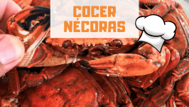 CÓMO COCER NÉCORAS