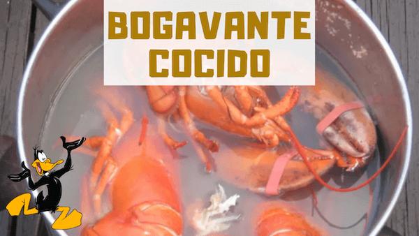 COMO COCER BOGAVANTE